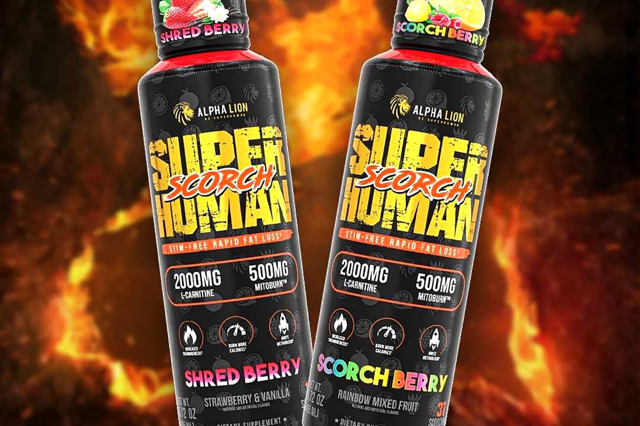 alpha lion superhuman scorch